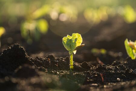 Close up of a young plant sprouting from the ground with green bokeh background Reklamní fotografie
