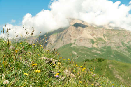 Flowers on background of Mountain landscape with green meadow. Reklamní fotografie - 151833747