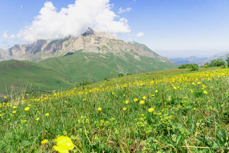 Flowers on background of Mountain landscape with green meadow.