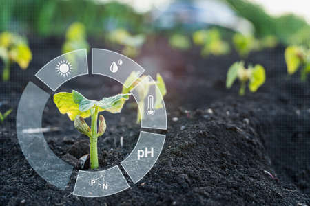 Monitoring the growth of crops. Smart Farming and Agriculture 4.0 Banque d'images