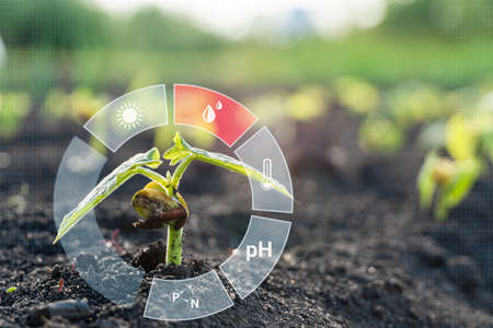 Monitoring the growth of crops. Smart Farming and Agriculture 4.0. Smart farming with IoT.
