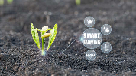 Smart Farming and Agriculture 4.0. Monitoring the growth of crops. Modern Agricultural Information Technology Integrate concept. Stock fotó