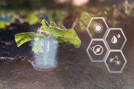 Smart farming 4.0, futuristic agriculture with modern technology Reklamní fotografie