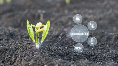 Smart farm 4.0 technology of monitoring the growth of sprougt crop plants with design infographics. Innovation technology for agriculture Stock fotó