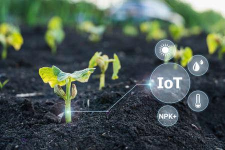 Sigital monitoring of crops of parameters on digital holographic screen Stock fotó