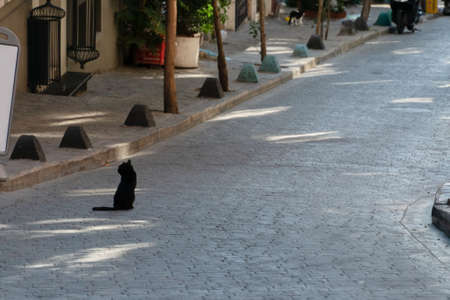 Stray cat sitting on the car road on a street