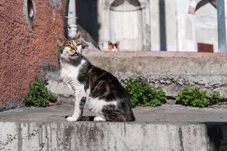 Stray cats sitting on the street Stock fotó