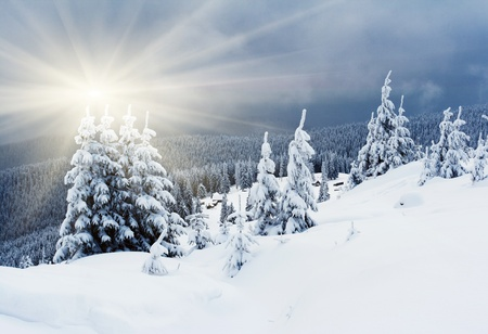 alp: Trees covered with hoarfrost and snow in mountains. Stock Photo