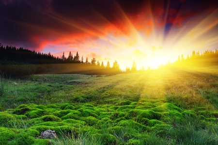 fog forest: Majestic sunset in the mountains landscape. HDR image