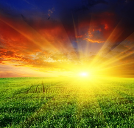 beautiful sunset over field with green grass Stock Photo