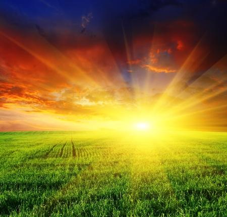 champ de mais: coucher de soleil magnifique sur le terrain avec l'herbe verte