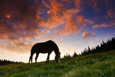 beautiful horse silhouette on a sunset background photo