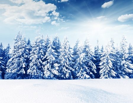 hoar: Beautiful winter landscape with snow covered trees Stock Photo