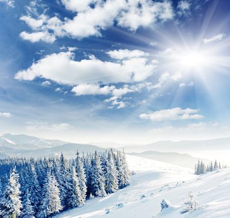paisaje: Paisaje de invierno con árboles cubiertos de nieve