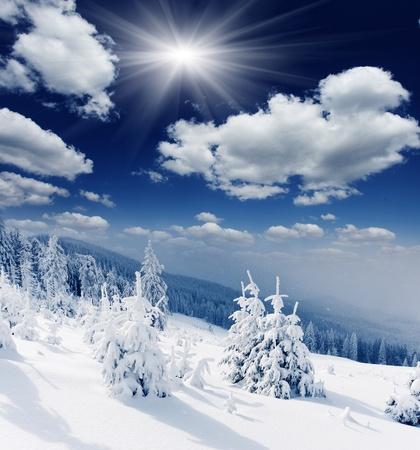 monta�as nevadas: Paisaje hermoso del invierno con los �rboles cubiertos de nieve