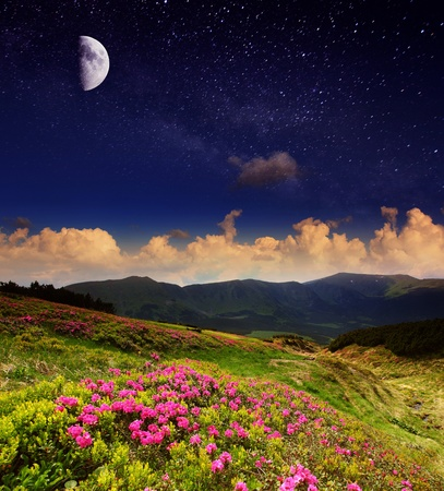 Magic pink rhododendron flowers under moon radiance