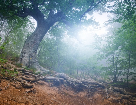 The magic forest in the early morning Stock Photo