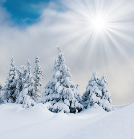 hoar: Trees covered with hoarfrost and snow in mountains  Stock Photo
