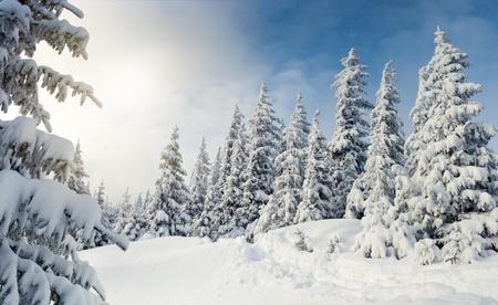Árboles cubiertos con escarcha y la nieve en las montañas