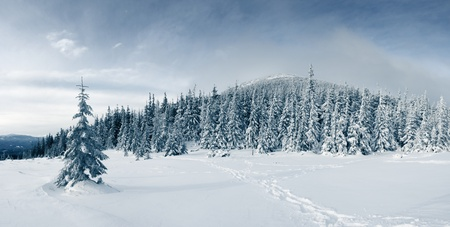cold weather: Beautiful winter landscape with snow covered trees Stock Photo