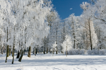 Beautiful winter landscape with snow covered trees photo