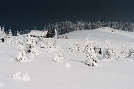 Trees covered with hoarfrost and snow in mountains. Mountain house photo