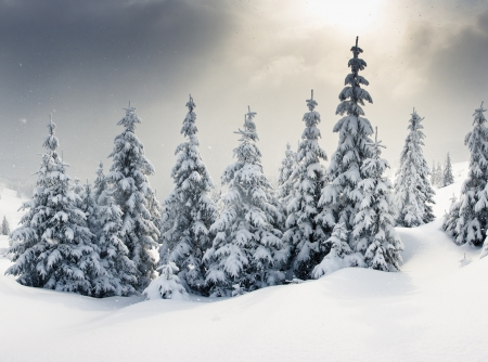 Trees covered with hoarfrost and snow in mountains photo