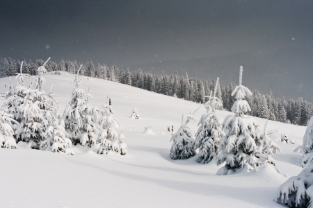 snowy mountain: Trees covered with hoarfrost and snow in mountains. Stock Photo