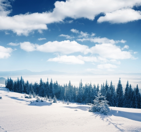 snow covered: Beautiful winter panorama with snow covered trees Stock Photo