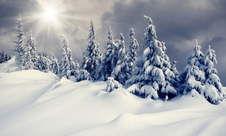 Beautiful winter landscape with snow covered trees 版權商用圖片