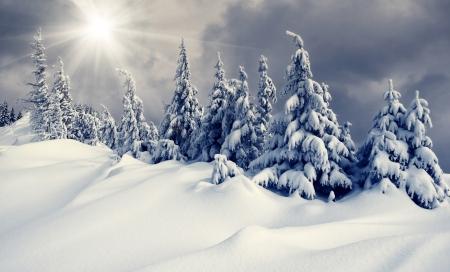 blizzard: Sch�ne Winterlandschaft mit schneebedeckten B�umen Lizenzfreie Bilder