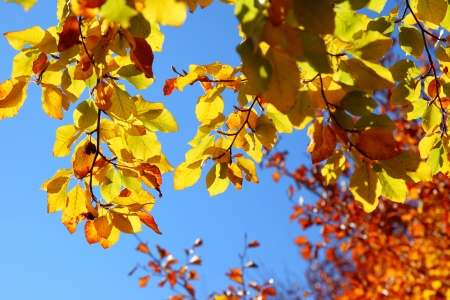 Bright colorful leaves on the branches in the autumn forest  photo