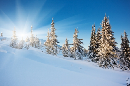 A frosty and sunny day is in mountains photo