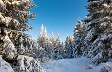 winter trees: A frosty and sunny day is in mountains Stock Photo