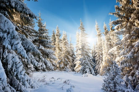 A frosty and sunny day is in mountains Stock Photo