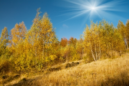 Colorful autumn leaves on a trees in forest photo