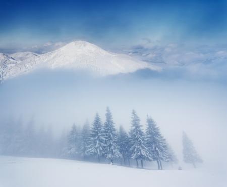 montañas nevadas: Paisaje de invierno con ?rboles cubiertos de nieve