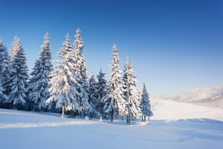 wonderland: A frosty and sunny day is in mountains Stock Photo