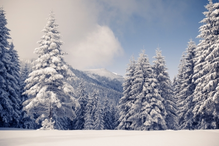 snow scenes: Beautiful winter landscape with snow covered trees Stock Photo