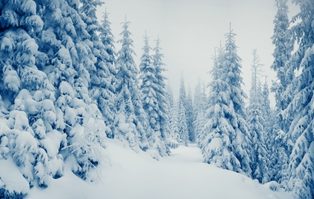 winter wonderland: Beautiful winter landscape with snow covered trees Stock Photo