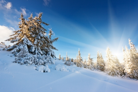 white winter: A frosty and sunny day is in mountains Stock Photo