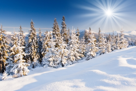 hoar frost: Trees covered with hoarfrost and snow in mountains. Stock Photo