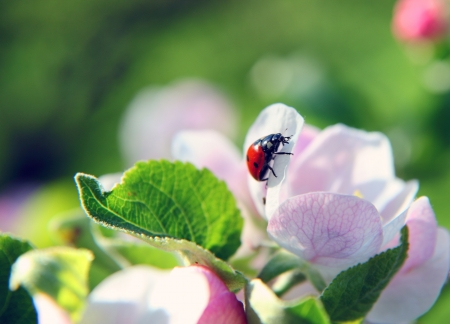 Close-up photo of a ladybird walking down a flower photo