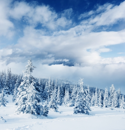 christmas landscape: Beautiful winter landscape with snow covered trees Stock Photo