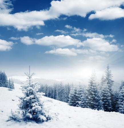 snow scenes: Beautiful winter panorama with snow covered trees Stock Photo