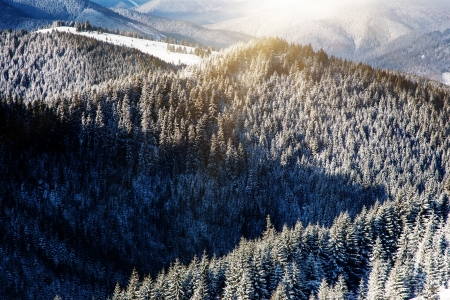 rime frost: Beautiful winter landscape with snow covered trees. Carpathian, Ukraine, Europe. Beauty world. Stock Photo
