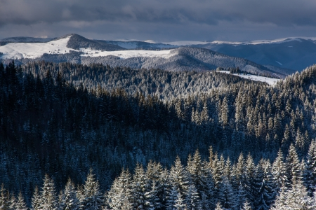 Beautiful winter landscape with snow covered trees. Carpathian, Ukraine, Europe. Beauty world. Stock Photo - 18806572