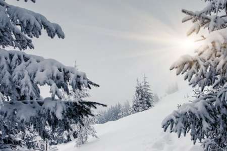 A frosty and sunny day is in mountains. Carpathian, Ukraine, Europe. Beauty world. photo
