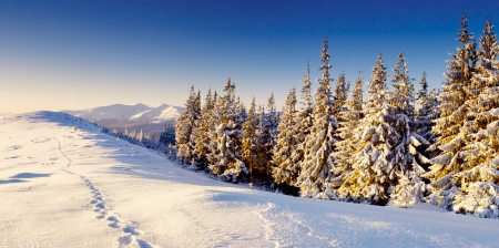 winter scene: Beautiful winter panorama with snow covered trees Stock Photo