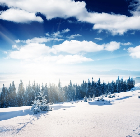rime: Beautiful winter panorama with snow covered trees Stock Photo